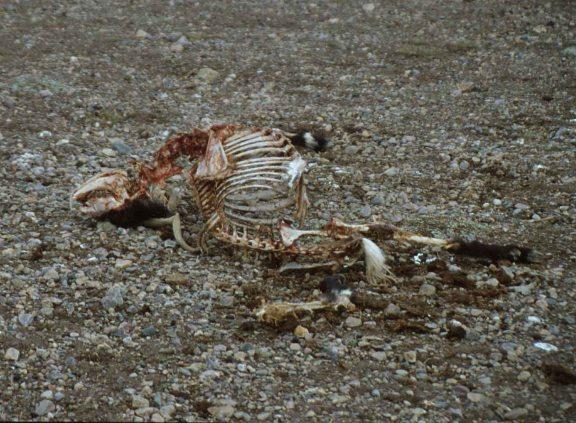 Dead livestock2