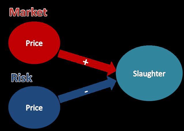 marketvsrisk